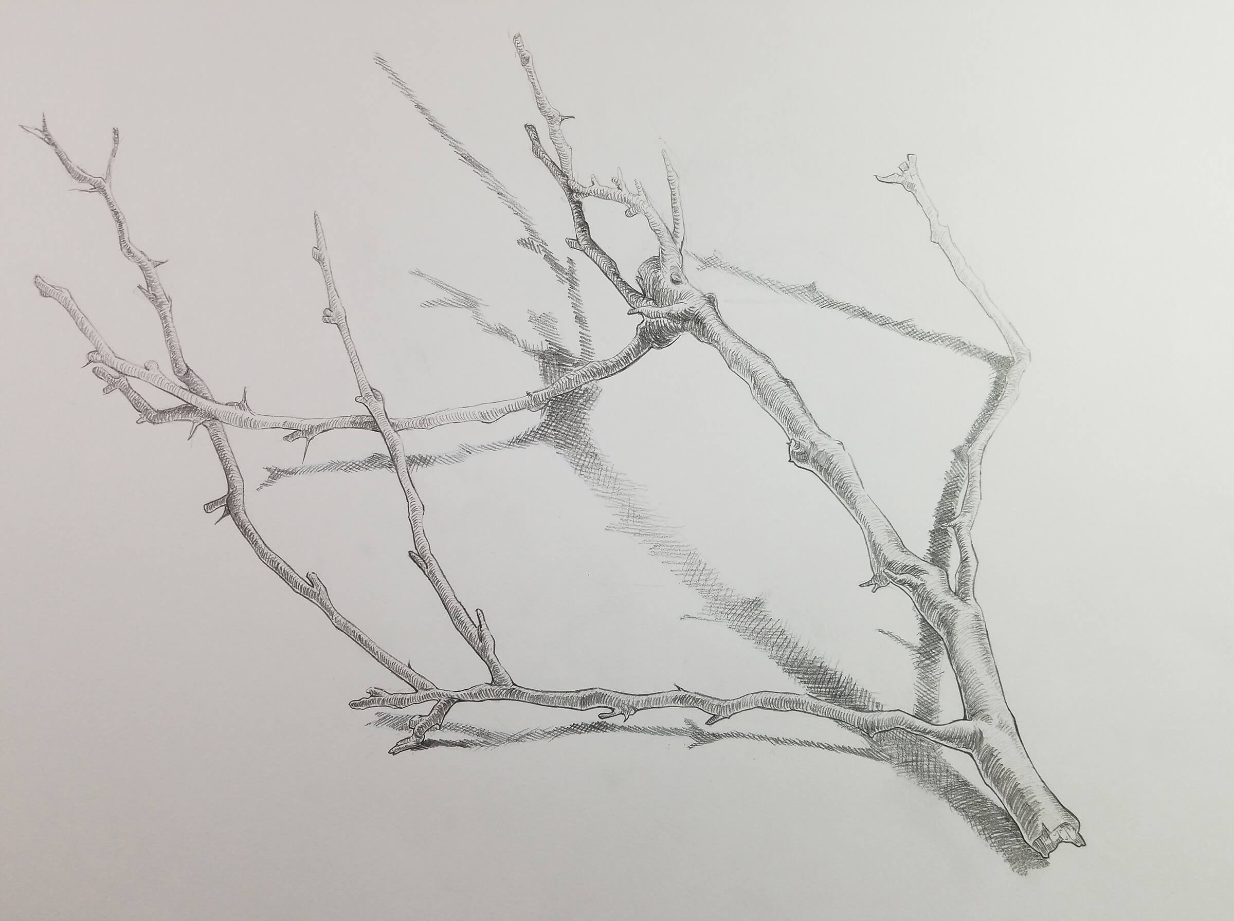 A detailed drawing of a tree branch