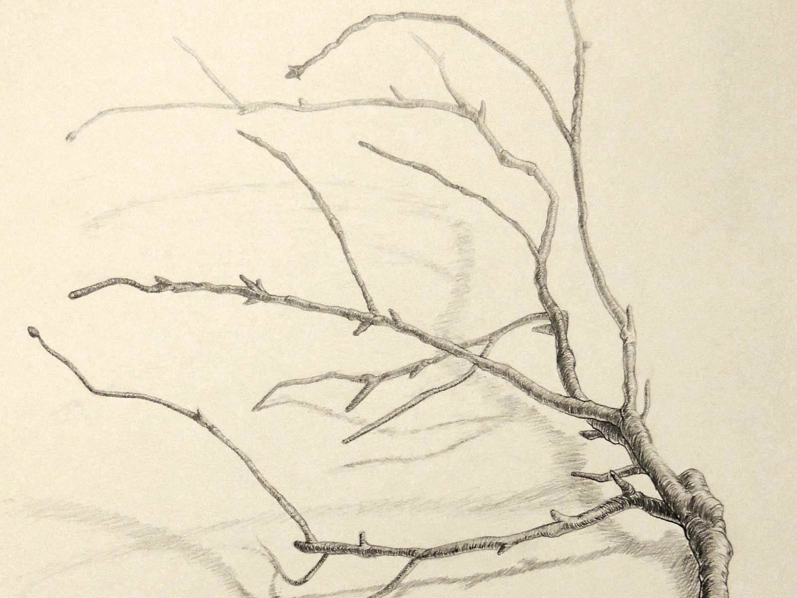 black and white still-life drawing of a tree branch