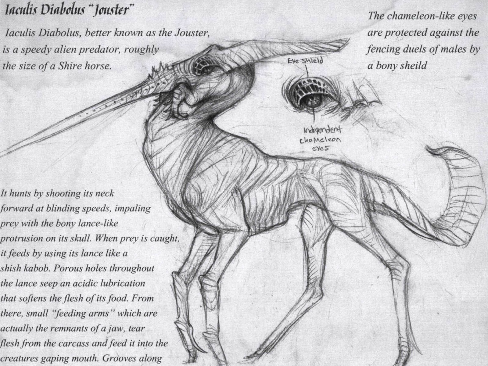 black and white drawing of the anatomy of an alien predator with a horse's body and a lance-like protusion on its skull
