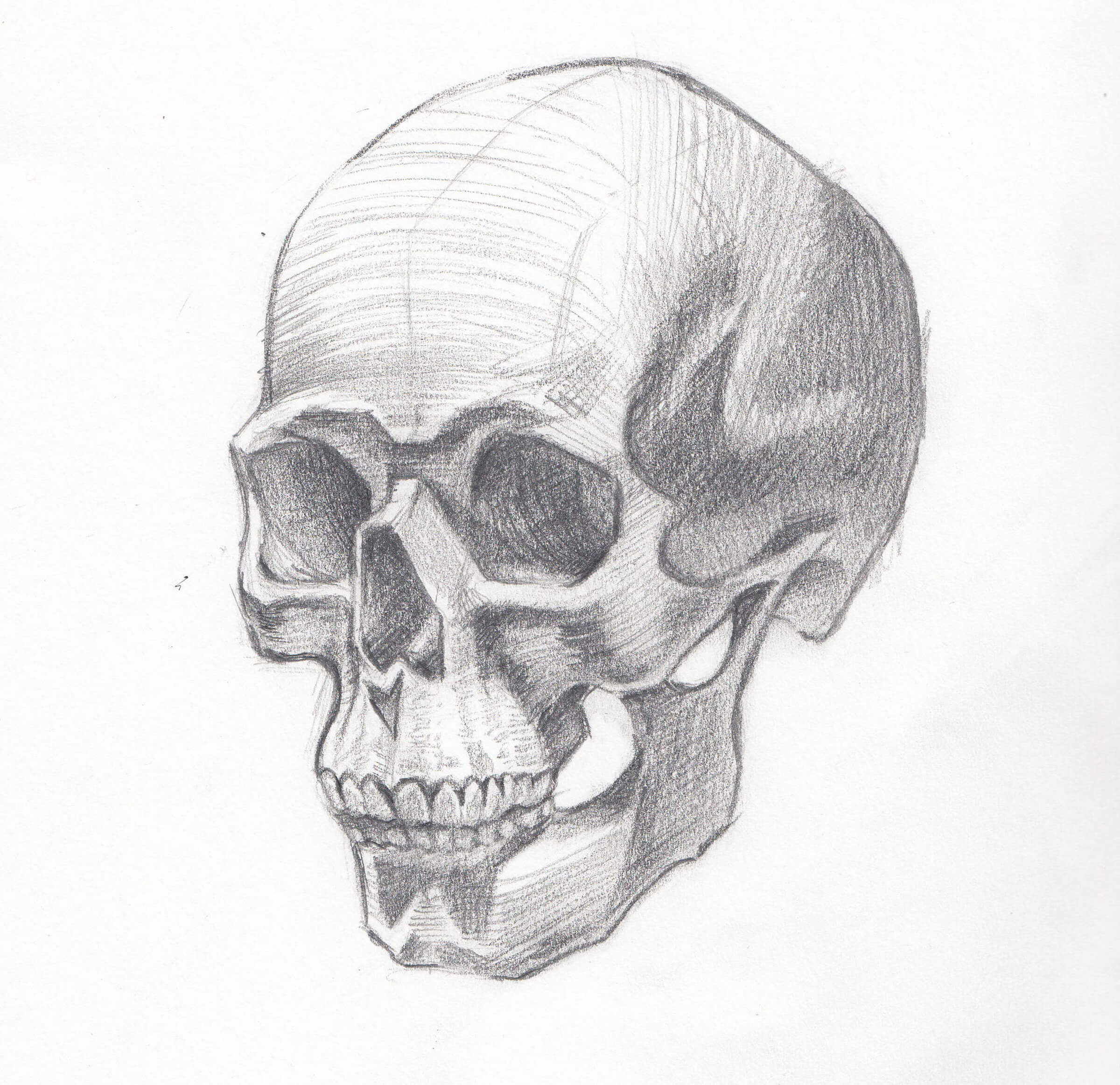 A black-and-white sketch of an unadorned human skull.